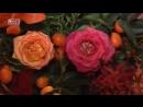 Платиновые бракосочетания, 3 сезон, 23 эп. Шейла и Сантош
