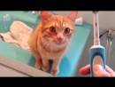 Любитель массажа от зубной электрощетки