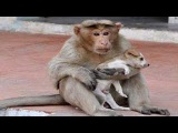 Emotional and Amazing Animals Rescuing Other Animals 2 HD