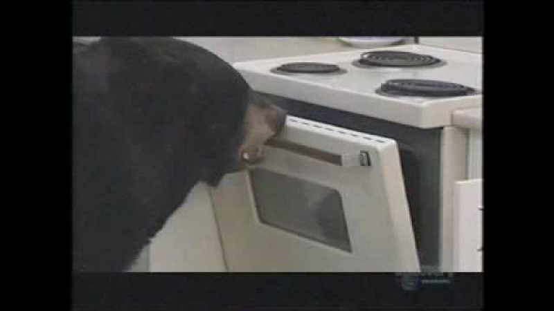 There's a bear in my kitchen!