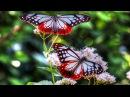 Практика-медитация Полет бабочки