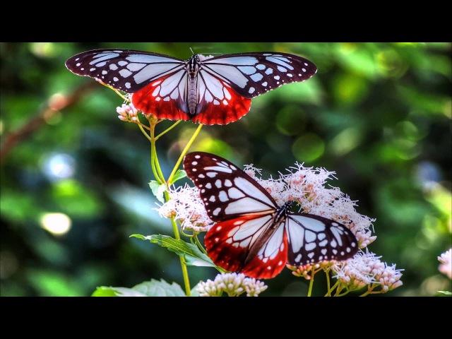 Практика медитация Полет бабочки