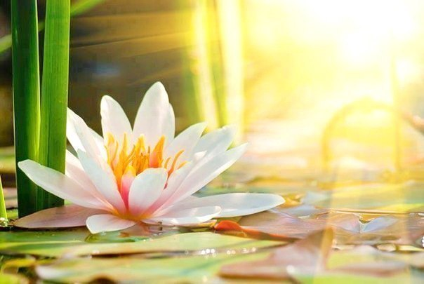 Пробуждение внутренней мудрости