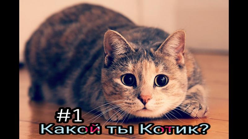 Поляковский Летсплей 3 Какой ты Котик 1 Мяу Мур