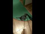 Не все коты боятся пылесоса