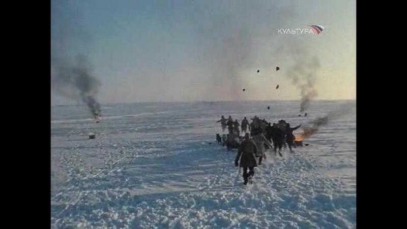 Обыкновенная Арктика 1