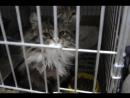 Говорящая кошка ищет дом