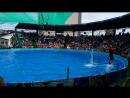 Дельфинарий в Адлере выступление часть какая то 2...