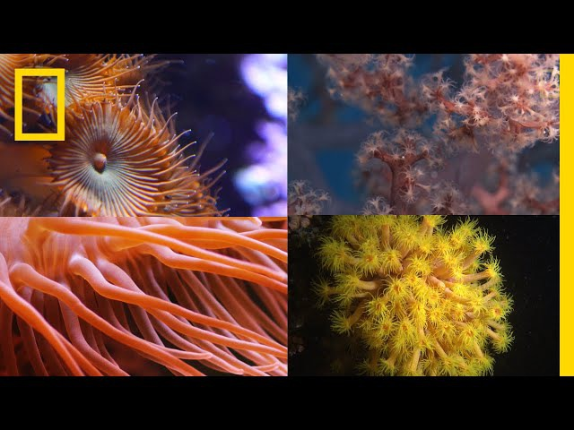 Coral Reefs 101 National Geographic