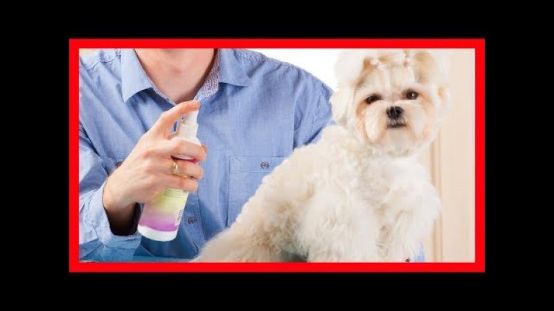Sirve el aceite de árbol de té para las pulgas en perros