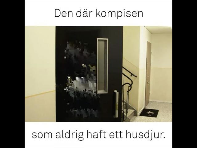 Jag får testa ha en hund för en dag - kolla hela klippet på youtube - Klippet är taget ur serien på Dplay.se/Samir 😚