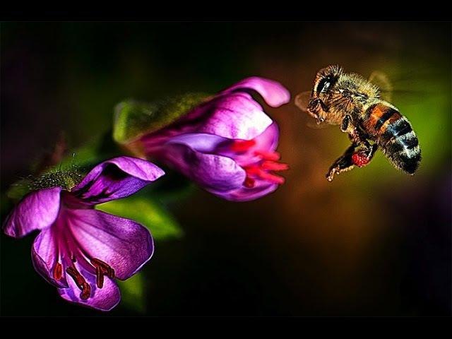 Животный мир пустыни и саванны сквозь объектив. Война насекомых. Прикольные съё ...