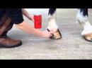 Carr Day Martin - Vanner Prest Hoof Oil