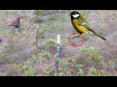 Amazing Quick Bird Perch Snare Trap in Cambodia - Traditional Bird Traps Homemade in Action