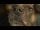 BBC Животный интеллект 1 серия из 3 Органы чувств BBC Inside The Animal Mind 2014