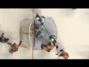 НХЛ Сезон 2016 17 Нэшвилл Даллас 5 2 Обзор матча