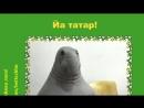 Учак! Ты татарская! :