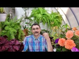 Что делать с растениями в жару