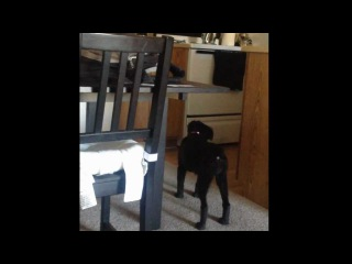 Dog sees a ghost! Real! Caught on tape!