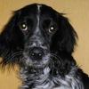 Помощь собакам-спинальникам. Степкина надежда