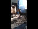 драка животных