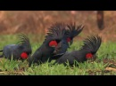 Animals - Discovery Channel Documentary - National Geographic Documentary