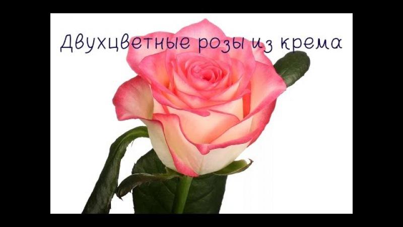 Двухцветные розы из крема