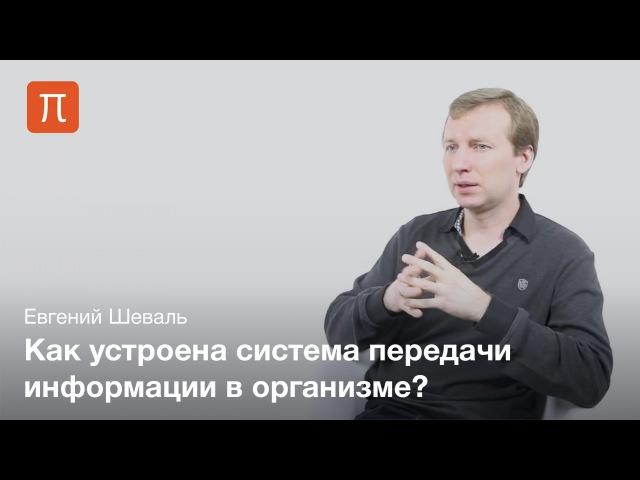 Евгений Шеваль - Общение клеток tdutybq itdfkm - j,otybt rktnjr