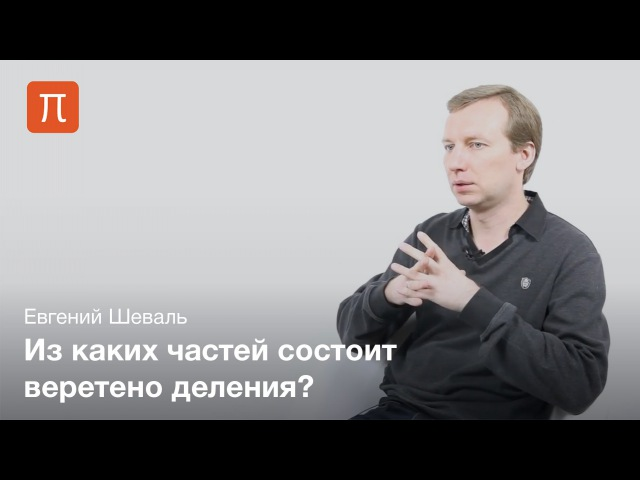 Евгений Шеваль - Размножение клеток tdutybq itdfkm - hfpvyj;tybt rktnjr
