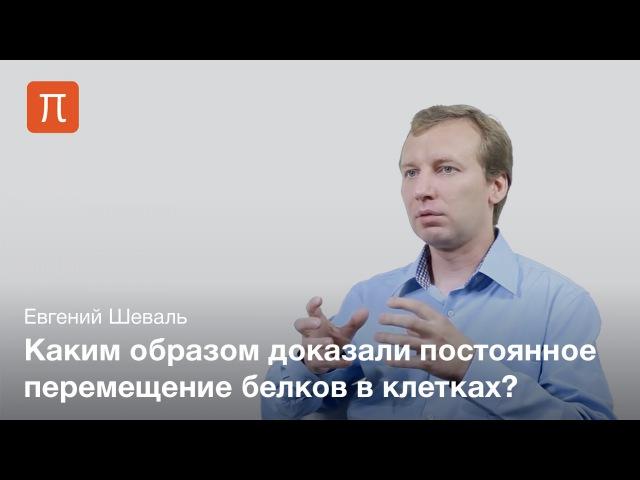 Евгений Шеваль - Живая клетка tdutybq itdfkm - ;bdfz rktnrf
