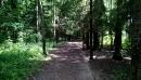 Тропинка в Гурьяновском лесу 7