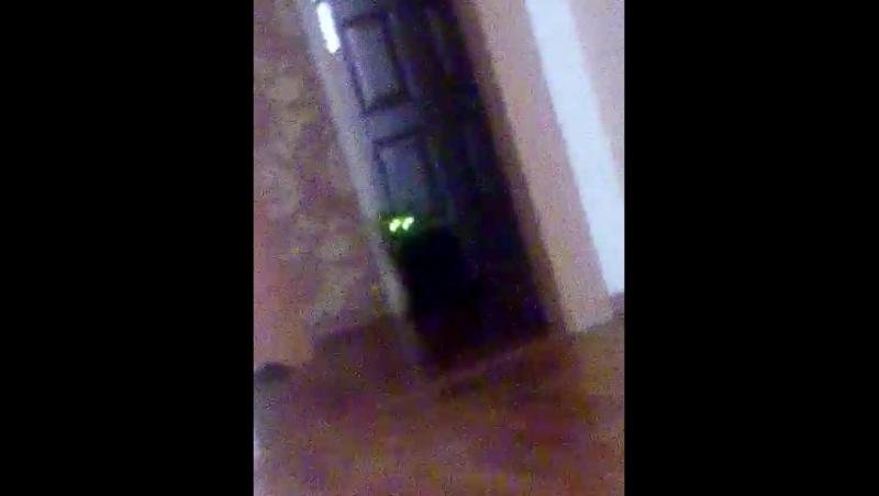 Кошка с оптикой ночного видения