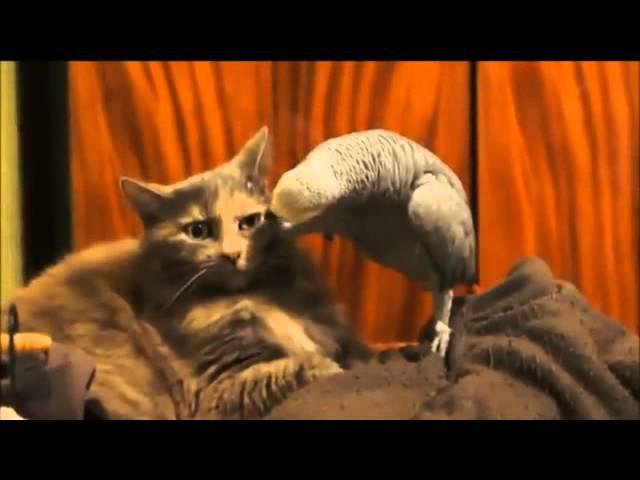 ПРИКОЛ Попугай и Кот СМЕШНО ПРИКОЛЫ С КОТАМИ И КОШКАМИ