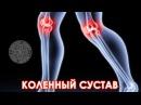 Доктор Спорт Анатомия коленного сустава ljrnjh cgjhn fyfnjvbz rjktyyjuj cecnfdf
