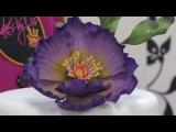 Como Hacer una Amapola de Fantasia en pasta de Azucar- Hogar Tv por Juan Gonzalo Angel