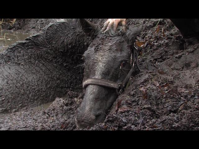 Pferd im Schlamm versunken - horse into swamp