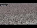 Казнь египетская в Калмыкии республике угрожают полчища саранчи