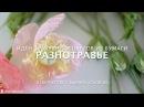 Разнотравье: идеи цветов и трав в букетах из конфет