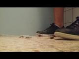 Snail Shoe Crushing