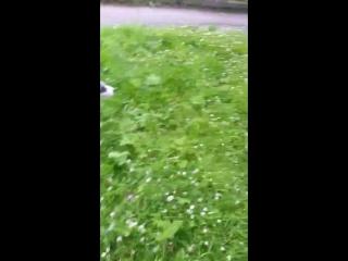 охота на мотыльков