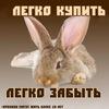 Москва. Помощь кроликам, попавшим в беду.