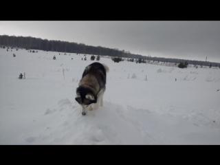 Просто собака роет нору