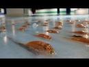 В японском парке аттракционов в каток вморозили 5000 рыб