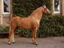 Самая дорогая лошадь. Испанская Коррида.Жесть !!!