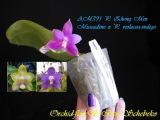 Орхидея: AM391 P. Zheng Min Muscadine x P. violacea-indigo