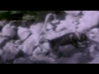Х/Ф Белый Клык 2: Легенда о белом волке (1994г)