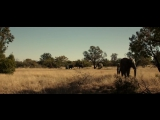 Слоны мои друзья (Братья из Гримсби) ПРИКОЛ ИЗ ФИЛЬМА_HD