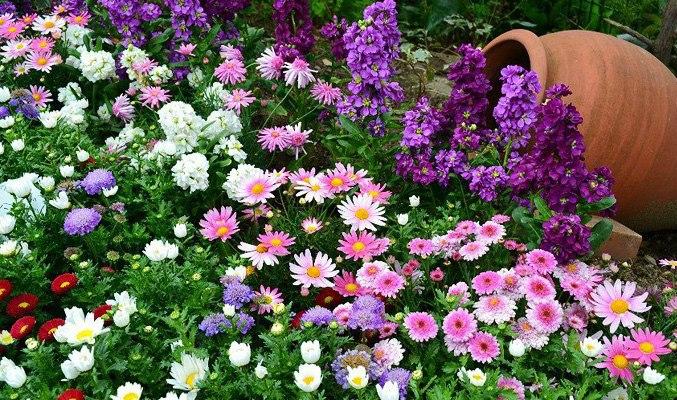 Новые цветники в Алтуфьево появились благодаря средствам от парковок