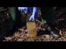 Житомирські екологи виявили несанкціоновані стоки на території Ботанічного саду
