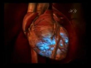 Сердце (2 часть). Шедевр Творца!